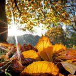 autumn-tips